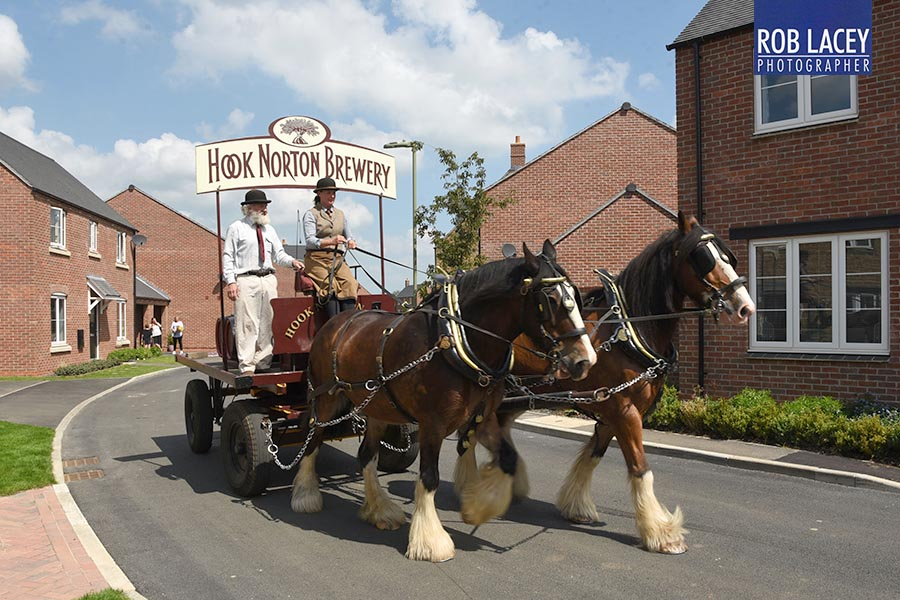Hook Norton Shires